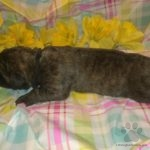 Tank n Zoey Black Collar Male 3 days