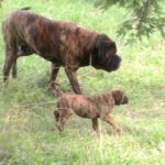 "Temperment of Rebel with his Daughter Nakita ""Gentle"""